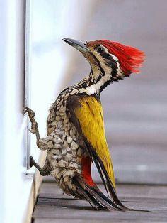 By Eu amo pássaros.