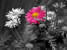 black and white pictures with pink - Google Search