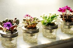 wick pots for mini african violets - jelly jars with metal condiment cups