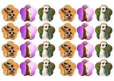 MEERKAT # Edible cake party toppers x 24