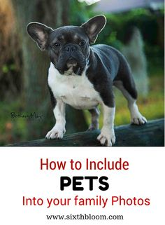 How to Include Pets into Your Family Photos, Pets in Pictures, Photography Tips