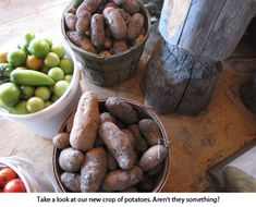 Such a good blog..this is homesteading at its best.