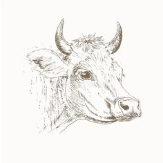 step by step cow drawing face Cow Drawing, Line Drawing, Cow Painting, Painting & Drawing, Large Scale Art, Pyrography Patterns, Cow Face, Arte Sketchbook, Cowboy Art