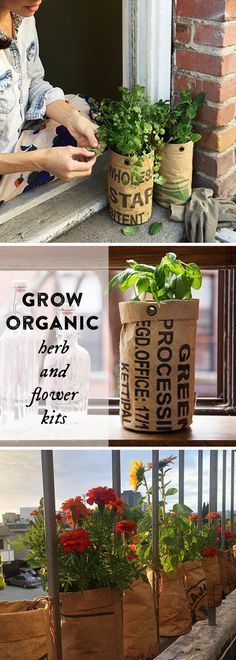 Grow organic herbs and flowers—on a balcony or windowsill. Nutrient-rich soil, special seeds, and an upcycled pot that drains, aerates, and promotes healthy roots. Great for urban gardening. Grow Organic, Organic Herbs, Organic Gardening, Gardening Tips, Urban Gardening, Indoor Gardening, Santa Fe, Diy 2019, Urban Agriculture