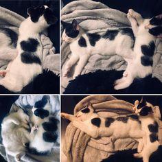 state of he(ART) ??? Art World, Cat Art, Shag Rug, Cats Of Instagram, Kittens, Heart, Shaggy Rug, Cute Kittens, Baby Cats