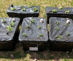 Raised Planter Boxes, Garden Planter Boxes, Box Garden, Garden Ideas, Garden Path, Herb Garden, Vegetable Garden, Planters, Tomato Planter