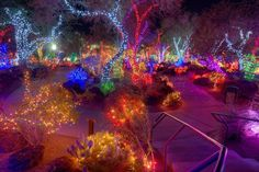 The country's quirkiest Christmas display is this cactus garden with over a million lights