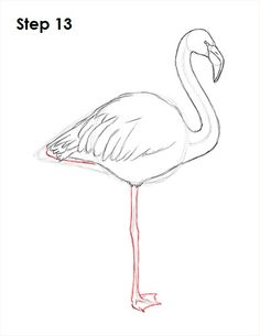 Flamingo Bird Drawing 13