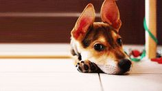 Gif-Cute Puppy!