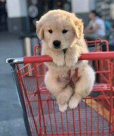 Featuring cute dogs and puppies from all around the world. Watch funny dog pictures, see cute puppy pictures and more! Super Cute Puppies, Baby Animals Super Cute, Cute Little Puppies, Cute Little Animals, Cute Dogs And Puppies, Cute Funny Animals, Bulldog Puppies, Doggies, Adorable Dogs