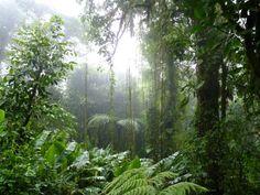 Zip line through the rainforest