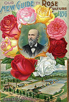 Catalog Information    Company Name:  Dingee & Conard Co.    Catalog Title:  Our New Guide to Rose Culture (1898)  Publication Information:  West Grove, PA  United States  Category(ies) of Cover Art:  Farms  Men  Roses