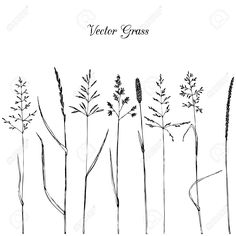 Illustration about Set of line drawing grass,isolated hand drawn wild cereals,ink drawing vector illustration. Illustration of illustration, grain, botany - 56003861 Grass Drawing, Plant Drawing, Botanical Line Drawing, Botanical Illustration, Grass Silhouette, Wildflower Drawing, Wild Grass, Simple Line Drawings, Doodle Lettering