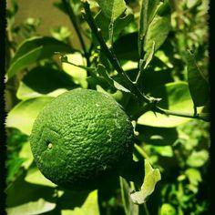 #MyDubai #dubaiart #dubai #fadiradi #summer_time #gardenlove #gardenmagic #gardendesign #diygarden #diygardendesign #Mudon_Villas #Mudon #dp #dubaistyle #orange #summerfruit
