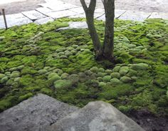 Moss planting by Ben Young Landscape Architects