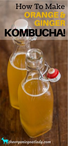 Do you make your own Kombucha? Are you always on the look out for new Kombucha flavors? This Orange and Ginger Kombucha Recipe is. Ginger Kombucha Recipe, Kombucha Flavors, Kombucha Tea, Kombucha Fermentation, Best Probiotic Foods, Probiotic Drinks, Fermented Foods, Fruit Drinks, Healthy Drinks