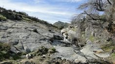 20 miles in Cuyamaca Rancho State Park (1000 Miles blog): Lookout Fire Road - Burnt Pines Trail - West Mesa Trail - Monument Trail - West Side Trail - Harvey Moore Trail - Granite Springs Trail - East Side Trail - Upper Green Valley Fire Road - Cold Spring Trail - Cold Stream Trail
