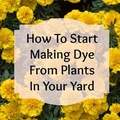 How to make dye from plants! Use things in your own yard to dye fiber and fabric!