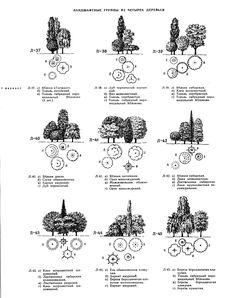 Группы из деревьев в саду