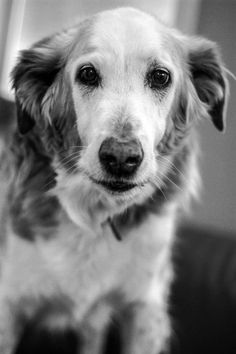 RIP May 3, 2014...Jesse is a palliative 17 year old retriever/ borzoi x