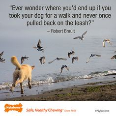 Ever wonder where you'd end up if you took your dog for a walk and never once pulled back on the leash? ~ Robert Brault Courtesy of www.nylabone.com #dogs #pets #quotes