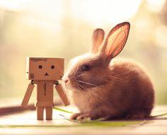 glückliche kaninchen bilder amazon kisten roboter
