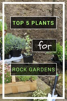 Rock gardens are fun, multi-dimensional spaces. The opportunity to populate the garden with diverse plants can create a fascinating show of color, texture and form.  Check out our top 5 plant recommendations for rock gardens.