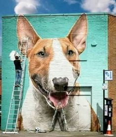 Bully Terrier, English Bull Terriers, Best Dog Breeds, Best Dogs, Beautiful Dogs, Animals Beautiful, Funny Dogs, Cute Dogs, Bully Dog