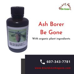Ash Borer Be Gone is an all natural product with NO pesticides or pharmaceuticals added. The healthy ingredients will feed the xylem vascular system to feed the whole tree and especially the phloem and cambium layer where the ash borer creates the damage. Call: 607-343-7781.  #blackknotdisease #blackknotfungus #blackknot #blackknotbegone #blackknotdiseasestreatment #blackknotfungustreatment #cherrytreefungus #plumtreediseasestreatment #bacterialcankers #cankersonfruittrees Cycle Of Life, Life Cycles, Ash Borer, The Pipeline, Shipping Pallets, Michigan State University, Beneath The Surface, Thing 1