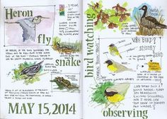 Jan Blencowe's Sketchbook Hypothesis: 3 Easy Ways to Begin Keeping a Nature Journal | Nature Study Homeschool Coop | Nature journal, Nature sketch, Watercolor … Diy Nature, Nature Study, Science Nature, Nature Activities, Earth Science, Outdoor Activities, Artist Journal, Art Journal Pages, Art Journals