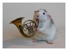 Rattenscharfe Musiker