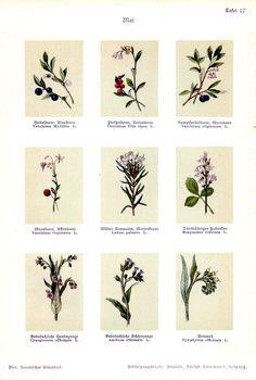 Botanisches Bilderbuch für Jung und Alt (1897)
