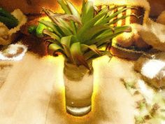 Maui Jungalow: How to Grow a Pineapple From a Pineapple Top used Fox Farms liquid fertilizer with great success