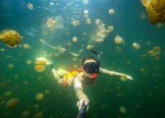 What a selfie! Katie Eberlie swimming through Palau's Jellyfish Lake.                                   Mount your waterproof GoPro camera to poles using the Handlebar / Seatpost / Pole Mount: http://gopro.com/camera-mounts/handlebar-seatpost-pole-mount