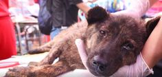 When you heard that dogs in China desperately needed you after being rescued from a butcher's truck, you donated. You saved hundreds of lives. You made sure these dogs would get the shelter, food, and medical care they deserved. https://www.facebook.com/SoiDogPageInEnglish/videos/1659747570733638/