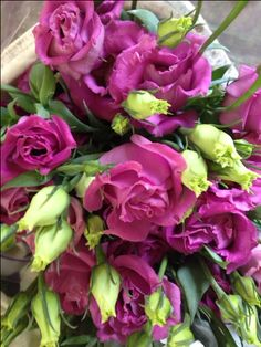 Lisianthus 'Violet Surprise' Sold in bunches of 10 stems from the Flowermonger the wholesale floral home delivery service.
