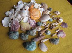 Seashells - Portuguese Seashore Seashells, 150 assorted seashells, DIY Seashells decorations & crafts