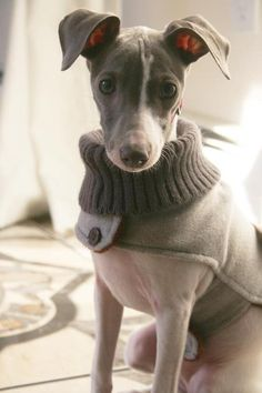 Ok so imagine this, but instead of it being for these mangy mutts, it would be for my glorious, majestic, hairless kitties! Now they could be so cozy in the winter! Mmmm!