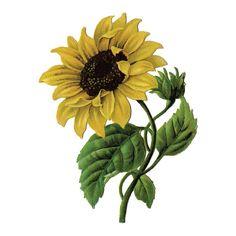 Tattify Sunflower Temporary Tattoo Sunny Disposition by Tattify
