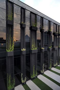 Troughs with Climbers on facade of building green walls green wall living wall landscaping landscape design landscape architecture hardscaping hardscape Architecture Durable, Architecture Cool, Sustainable Architecture, Contemporary Architecture, Landscape Architecture, Landscape Design, Contemporary Design, Architecture Student, Sustainable Building Design