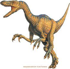 Dinosaure velociraptor : Classification Règne Animalia Embranchement Chordata Classe Sauropsida Super-ordre Dinosauria Ordre Saurischia Sous-ordre Theropoda Infra-ordre Coelurosauria — non-classé — Maniraptora — non-classé — † Deinonychosauria Famille † Dromaeosauridae Sous-famille † Unenlagiinae