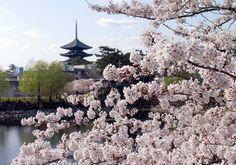 荒池より遠望した興福寺五重塔