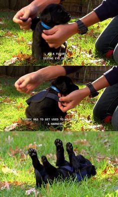 Adorable.... Saw this on 'Too Cute', it was soooo cute! :o)