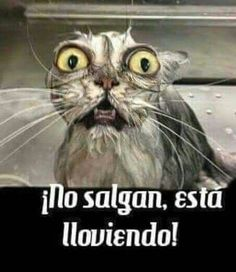 videoswatsapp.com imagenes chistosas videos graciosos memes risas gifs chistes divertidas humor http://ift.tt/2j5He8W