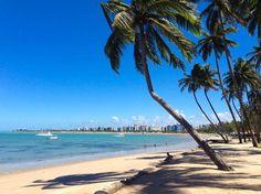 """Praia de Ponta Verde, uma das melhores e mais bonitas praias urbanas do Brasil. Localizada em Maceió, estado de Alagoas, Brasil. Observe os coqueiros, parecem """"tortos"""", assolados pelos ventos. Mas a paisagem que integram é linda!!  Fotografia: marciorai."""