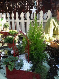 Rachie's Christmas Fairy Garden