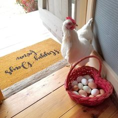 Happy Day Farm, Happy Sunday, Hen Farm, Red Chicken, Red Farmhouse, Little Red Hen, Farm Cottage, Farm Photo, Red Rooster
