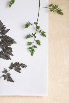 Botanische wanddecoratie, fotografie & styling: Marij Hessel
