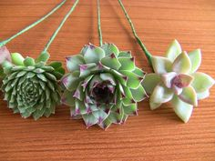 DIY Succulent Bouquet - Succulent Wedding Bouquets & Arrangements