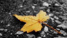 Rain Drop Wallpaper HD Natural Leaf 1920x1080px Resolution